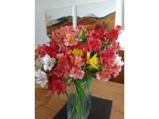 Venta de hermosas flores con despacho a domicilio